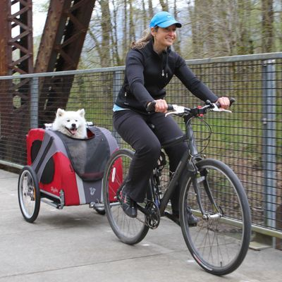 dog on bike 2.jpg